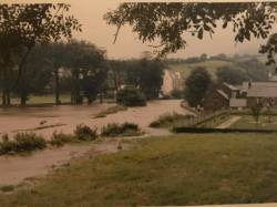 "September 1967. Photo taken across from the shore road entrance to cottage wood looking towards the ""back lane""."